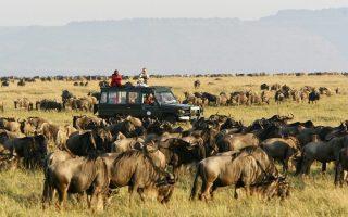 4 Days Tanzania Wildebeest Migration safari