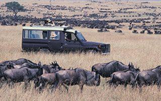 5 Days Kenya Wildebeest Migration Safari (Masai Mara & Lake Nakuru)