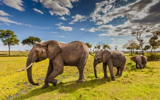 5 Days Masai Mara, Lake Nakuru & Lake Naivasha Wildlife safari