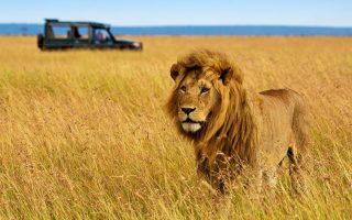 6 Days Amboseli, Nakuru & Masai Mara Wildlife safari