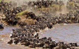 6 Days Masai Mara & Amboseli Wildlife Safari