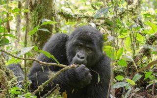 6 Days Uganda Gorillas & Tanzania Wildebeest safari