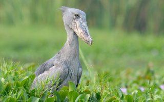 10 Top birding destinations in Uganda
