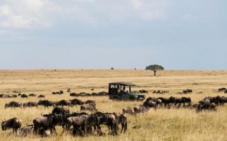 Activities and attractions in Masai Mara National Reserve