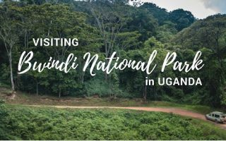 Getting to Bwindi Impenetrable National Park: