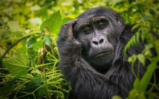 Wildlife photography Safari in Uganda