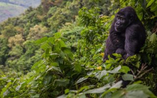 Vegetation in Bwindi Impenetrable National Park