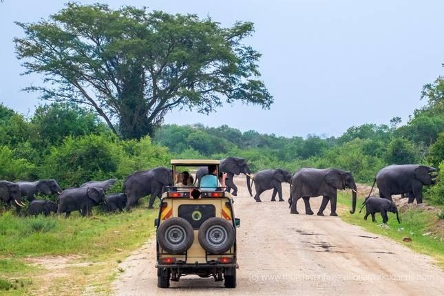 Uganda Safaris in April