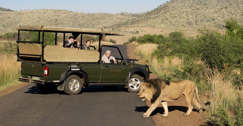 Uganda Safaris in February