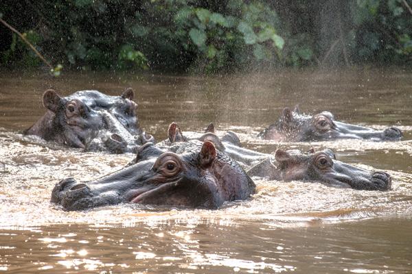 Uganda Safaris in January