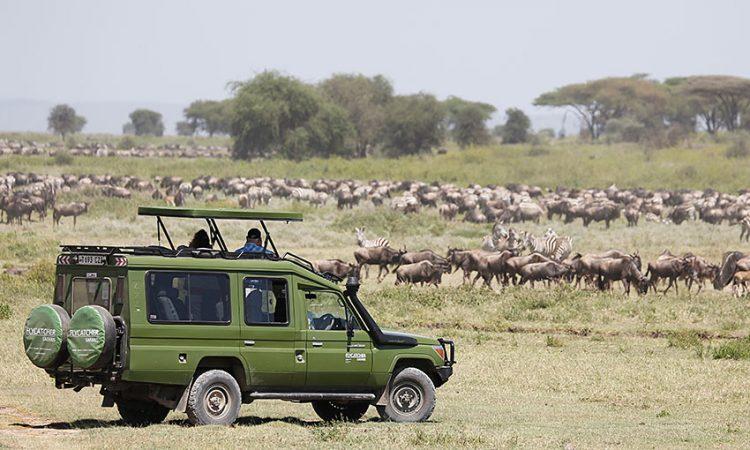 9 Days Classic Tanzania trip