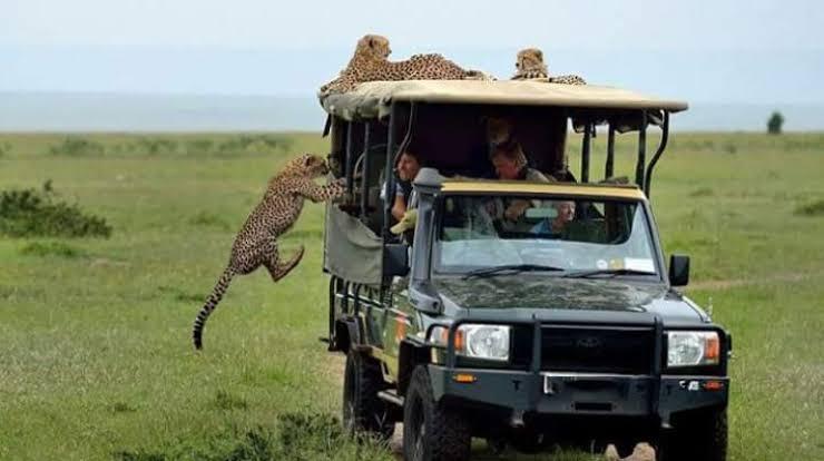 5 Days Kenya Birding & Wildlife safari