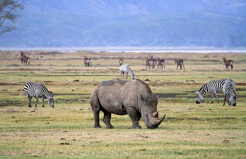 Ngorongoro conservation Area